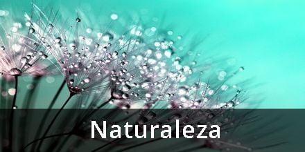 Haikus sobre la naturaleza